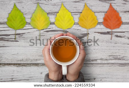 colorful autumn leaves with cup of tea #224559334