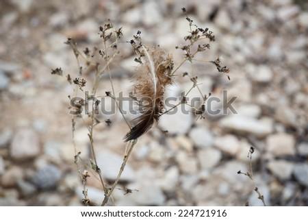 Dark birds feather on a bush #224721916