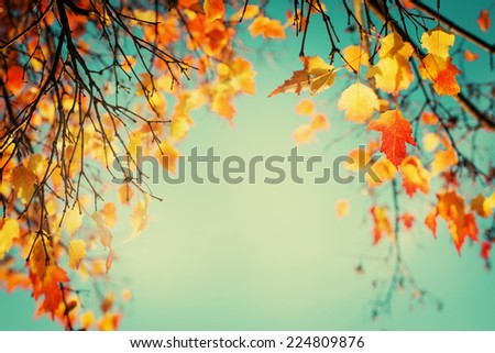 Autumn leaves sky background/ Autumn Trees Leaves in vintage color  #224809876