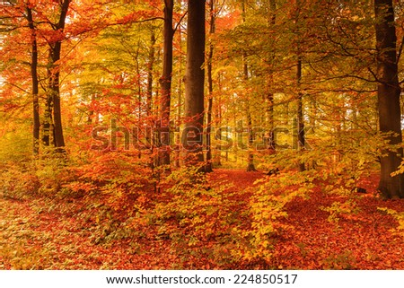 beautiful autumn colors in the forest #224850517