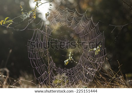Cobweb with dew drops in the grass early morning #225151444