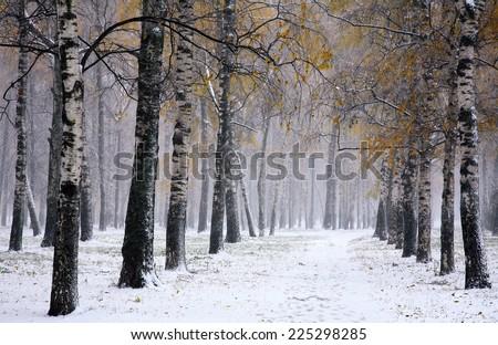 Snowstorm in golden autumn #225298285