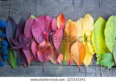 Autumn leaves and berries, Autumn background, Colors of Fall #225335341