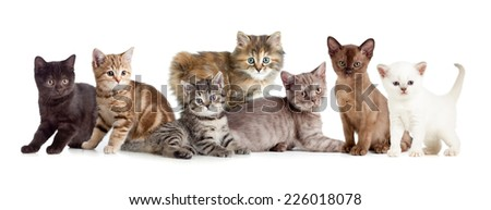 A group of different kitten #226018078