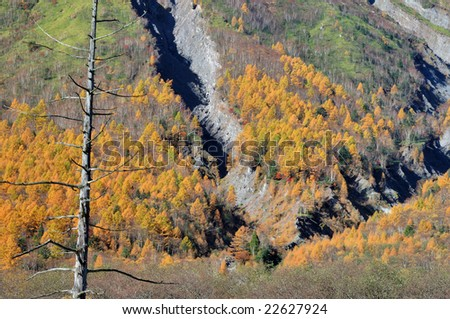 The colored leaves of the hillside #22627924