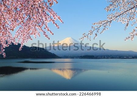 Mount Fuji with Cherry Blossom, view from Lake Kawaguchiko, Japan #226466998