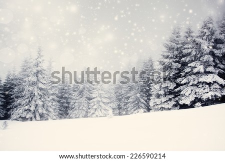 Vintage photo of Christmas background with snowy fir trees