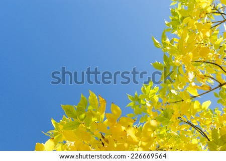 Golden autumn yellow leaves against clear blue sky. Corner frame background with free copy-space area for text. #226669564