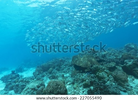 school of jack fish in Dimakya island, Palawan. #227055490