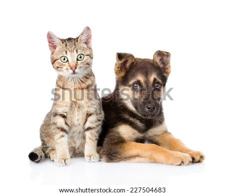 crossbreed dog and tabby kitten looking at camera. isolated on white background #227504683