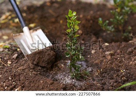 Tree planting #227507866