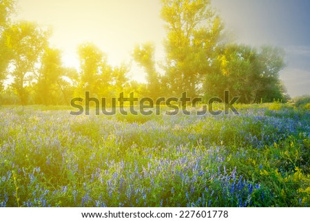 flowered forest glade at the sunset #227601778