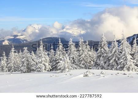 Fantastic snowy fair tree on colorfyl wild fields in sunshine  #227787592