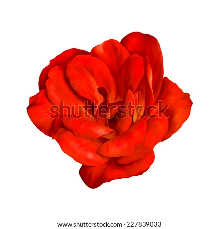 red rose flower isolated on white background. #227839033