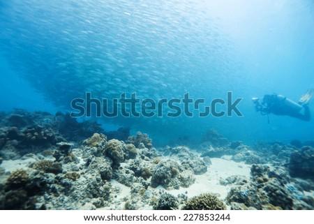 school of scad fish in Dimakya island, Palawan, Philippines. #227853244