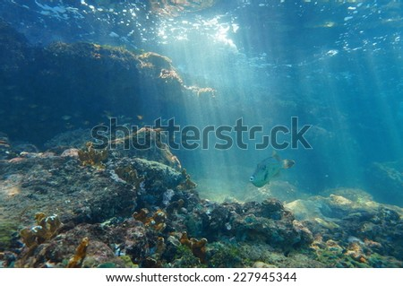 Rays of light underwater through the water surface viewed from the seabed on a reef with fish, Caribbean sea, natural scene #227945344