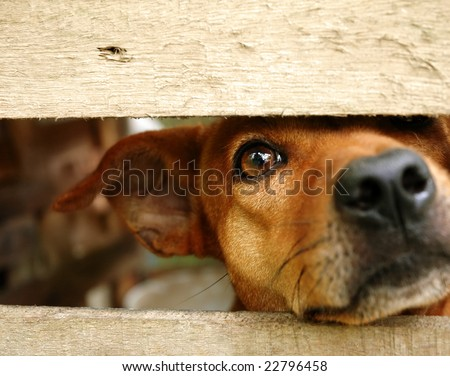 dog look at outside #22796458