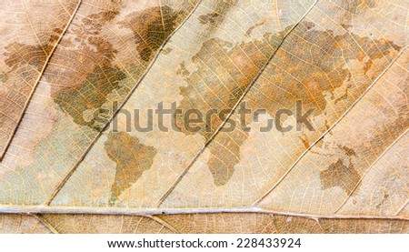 world map inside a dry leave #228433924