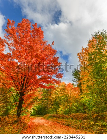 Country Roads: Autumn colors on the Hartwick Pines State Park scenic drive, near Grayling, Michigan #228445231