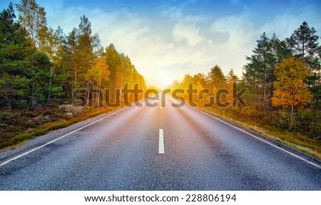 Fall scenic road in Sweden #228806194