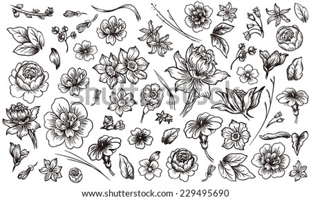 Detailed hand drawn flower and leaf set