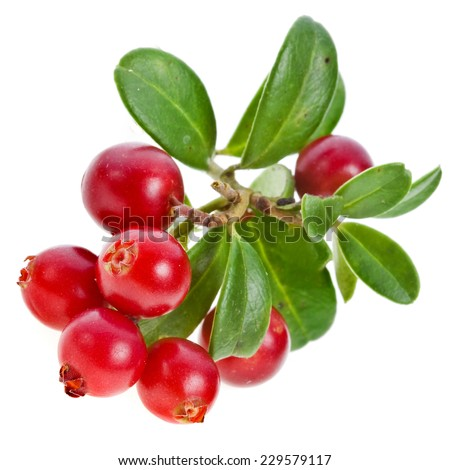 cranberries cowberries heap isolated on white background #229579117