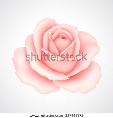 Pink rose. Vector illustration #229663372