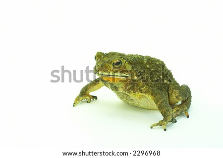 Green color big frog on the white sheet #2296968