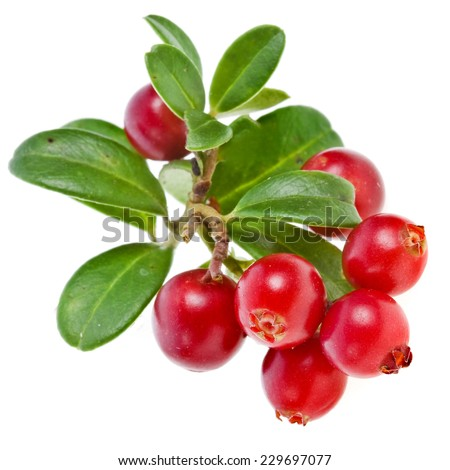 cranberries cowberries heap isolated on white background #229697077