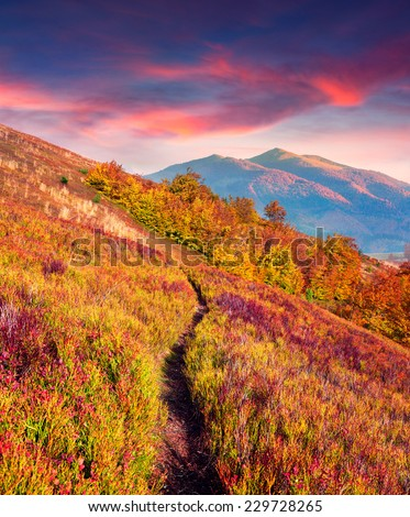 Colorful autumn sunrise in the mountains #229728265