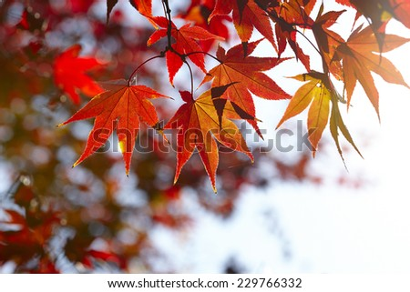 autumn background #229766332