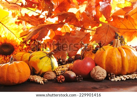 Different pumpkins with nuts, maize, berries and grain in front of highlighted oak foliage #229901416