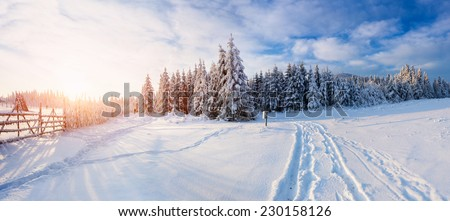 the winter road  Royalty-Free Stock Photo #230158126