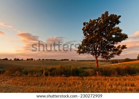 Lonely tree #230272909
