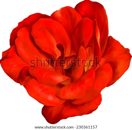 red rose flower isolated on white background. #230361157