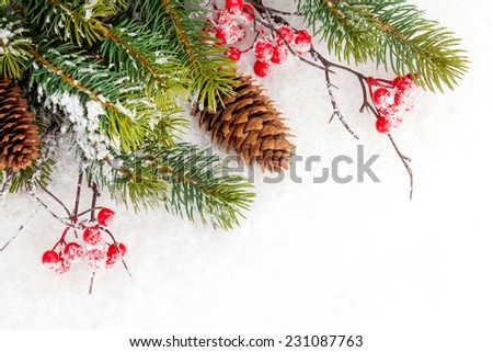 Christmas fir tree branch with holly berry over snow #231087763