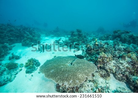 Tropical fish, corals and sponges around a thriving tropical coral reef of Palawan. #231661510