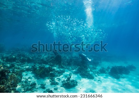 School of jack fish and diver pass through coral reef in Dimakya Island, Palawan. #231666346