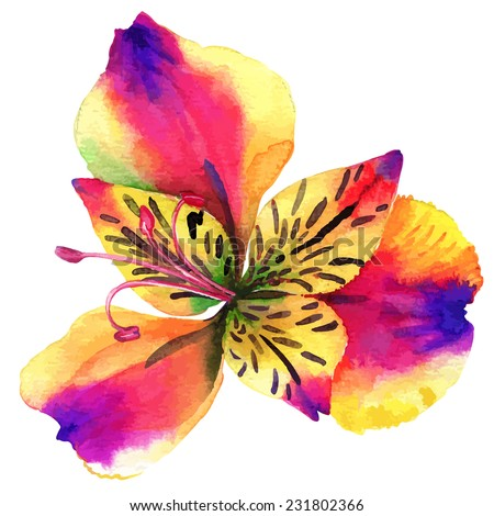 vector single alstroemeria flower. beautiful watercolor illustration.  #231802366