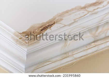 Peeling paint on an interior ceiling a result of water damage caused by a leaking pipe a result of substandard plumbing completed by an unqualified plumber. A common house insurance claim. Royalty-Free Stock Photo #231995860