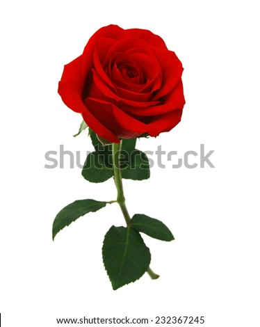 red rose isolated on white background  Royalty-Free Stock Photo #232367245