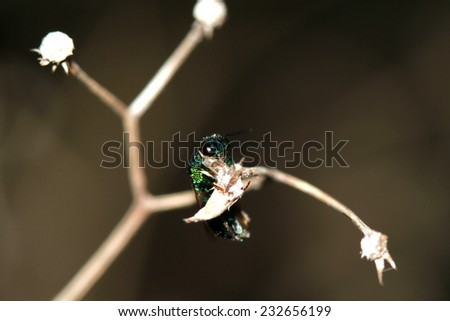 Fly in sect on branch #232656199