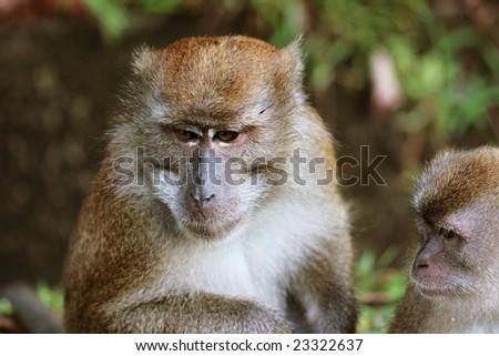 Monkey #23322637