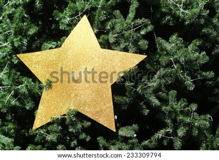 Beautiful christmas tree  and gold star decoration #233309794