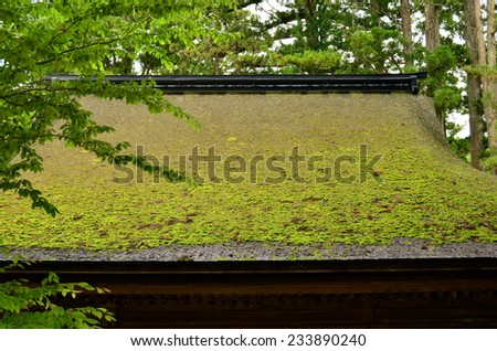 Moss covered temple roof #233890240