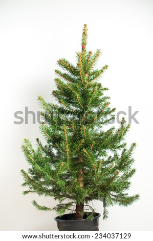 Real Christmas tree, isolated on white background. Preparing to decorate Christmas toys.  #234037129