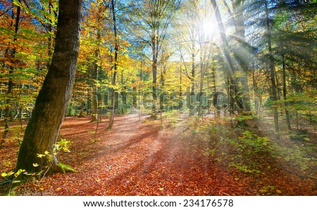 Colorful autumn landscape in the mountains  #234176578