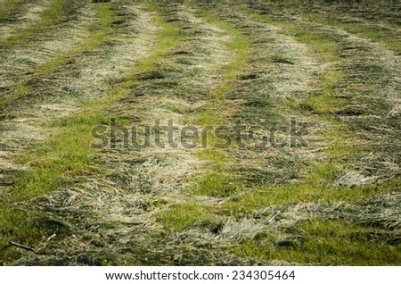 Mown meadow #234305464
