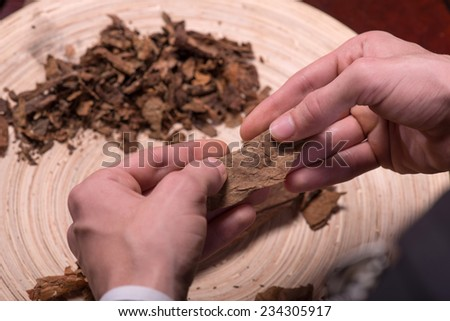 Selective focus on the process of making cigars from dried up leaves of tobacco plant. Close up #234305917