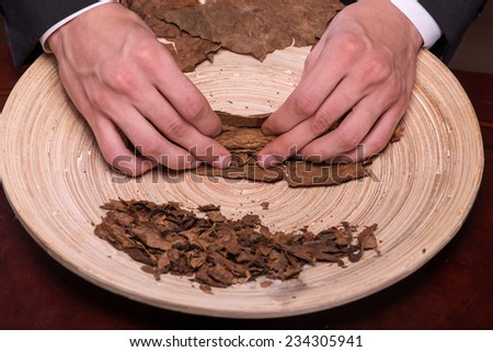 Selective focus on the process of making cigars from dried up leaves of tobacco plant. Close up #234305941
